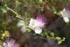 gafcon-jn23-mt-of-olives-gethsemane-orombi-address-033.jpg